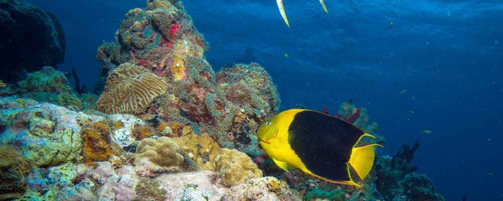 PADI Specialty Course diving in Grenada