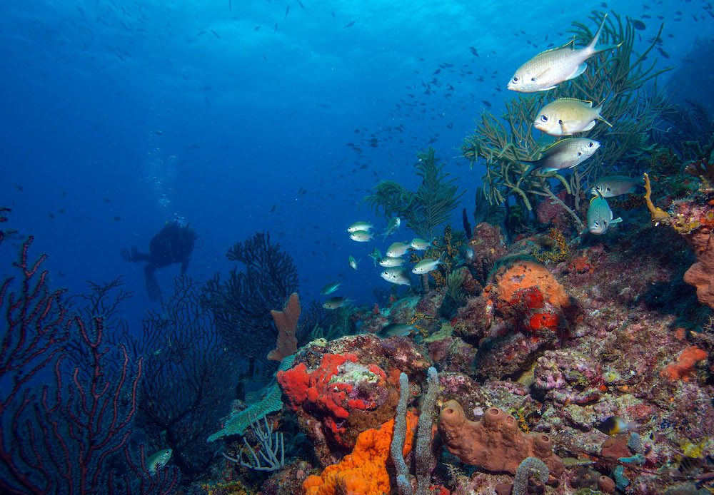 PADI Open Water Course diving on Grenada reef
