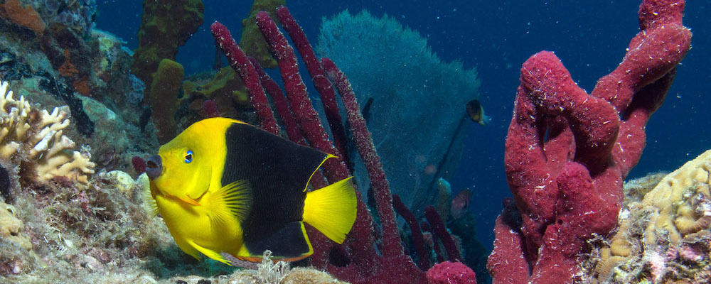 PADI Discover Scuba Diving with Dive Grenada