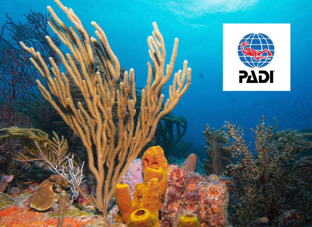 PADI Scuba Diving on Grenada Reefs
